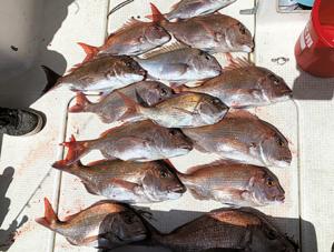 広島県の旭土質調査・瀬戸内海で釣れた真鯛
